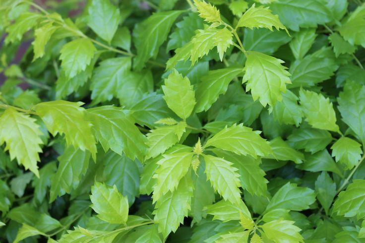 Plantas sede pance