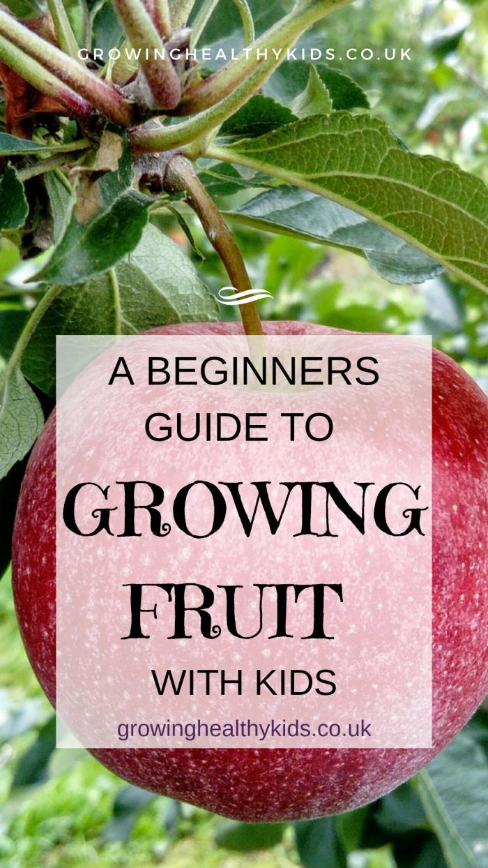 Grow Patio Fruit Trees And Other Delicious Fruit With Kids For A Tasty Summer Treat Patio Fruit Trees Growing Fruit Fruit Trees In Containers