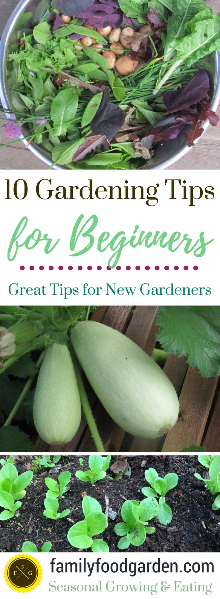 Beginners learn the most from their mistakes but it's nice to have some gardening wisdom for a better season Here are 10 beginner gardening tips that I've gathered from my own gardening experience and all the mistakes that I've made over the years. :)   Start Small Beginners may wish to grow ev