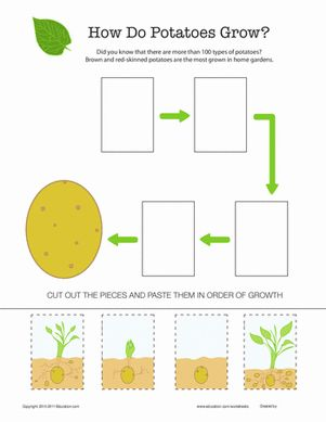 15 best gyop potatoes images on pinterest plants teaching science and elementary science. Black Bedroom Furniture Sets. Home Design Ideas