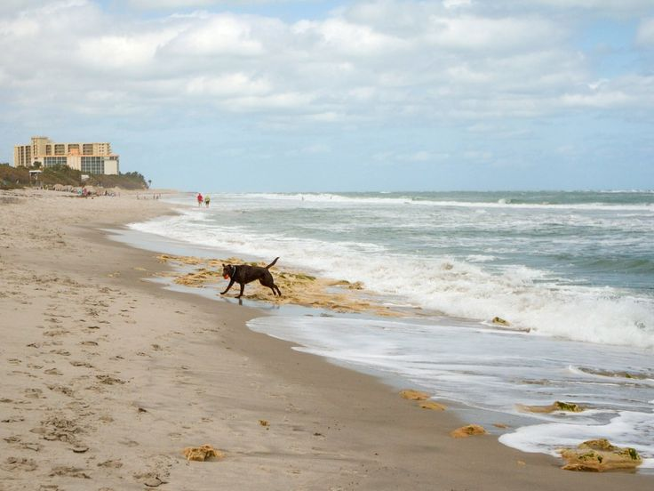 Expect paw prints of every shape and size along this off-leash beach in northern Palm Beach County—at 2.5-mile long (from Beach Marker