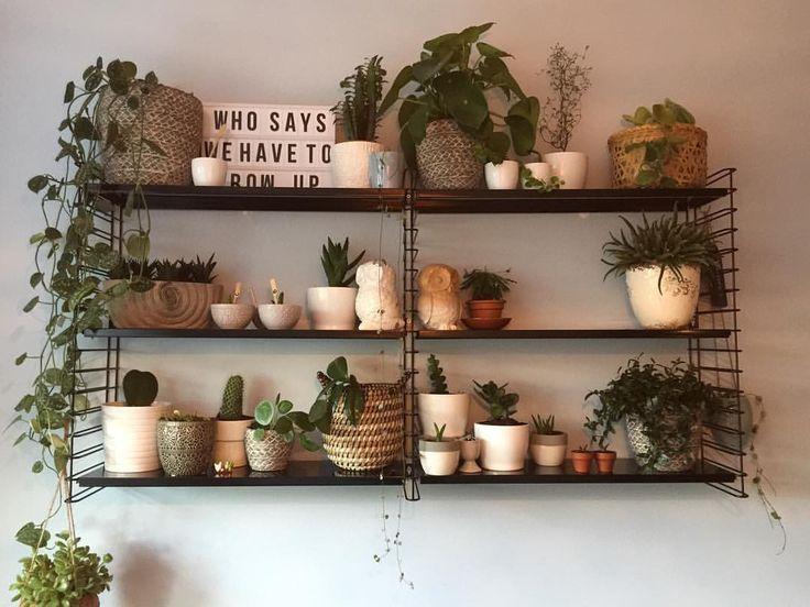 Mijn planten geordend en waar nodig voorzien van nieuwe aarde en/of pot.  #shartistiek #urbanjungle #planten #kamerplanten #houseplants #succulents #vetplanten #wasbloemen #hoya #cactus #cactaceae #mooiwatplantendoen