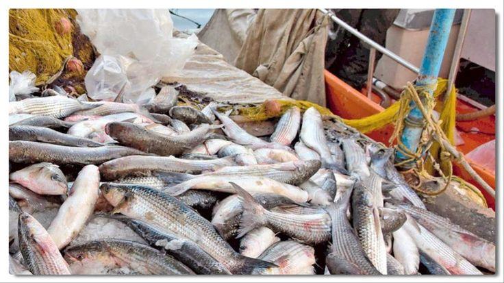 """""""Υπεραλίευση"""" όταν η Ελλάδα εισάγειτα 2/3 των ψαριών που καταναλώνει;"""
