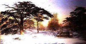 Neige immaculée dans les trois - (Andrew Maccallum)