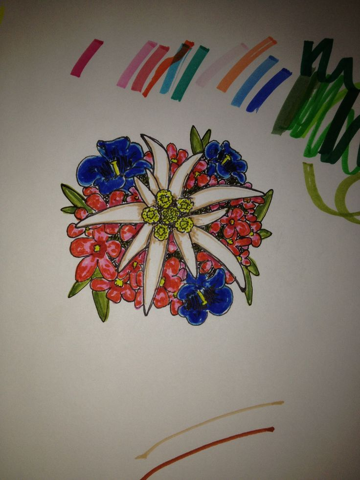 Edelweiss and other alpine flowers Getting this tattooed on my shoulder!!!!