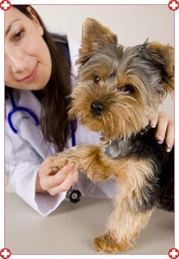 1000 id es sur le th me clinique v t rinaire sur pinterest for Service veterinaire cuisine