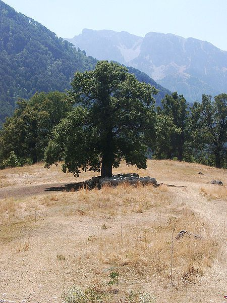 Sheep under the shade of a tree near Konitsa..