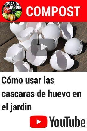 Usar cáscaras de huevo en el jardín es una gran manera de utilizar algo que no…