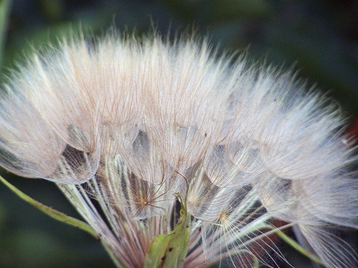 Flores y Plantas (6)