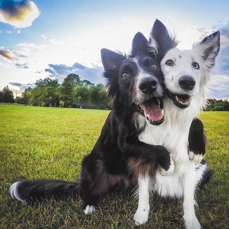 #dogs #friends