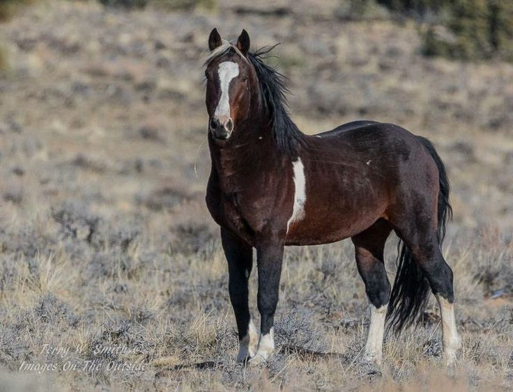 17 Best images about Beautiful wild horses still running ...