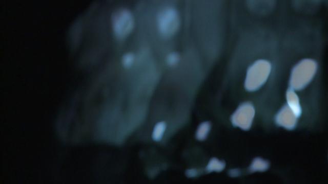 """Skull # 10 (Early alternative Pop)"", 2007 on Vimeo"