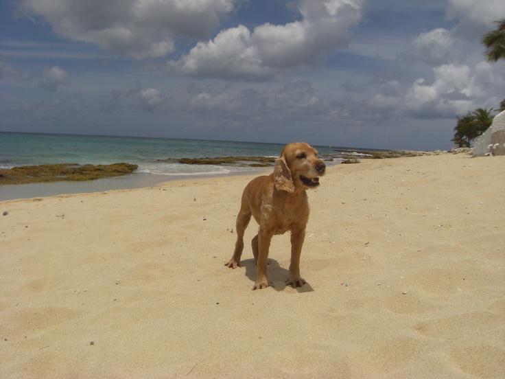 Chiara in St. Maarten  #stmaarten #karibikreisen #caribbeantours