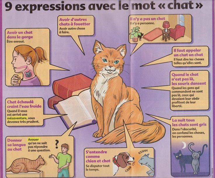 """expressions avec le mot """"chat"""""""