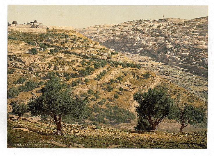 Палестина конца XIX века в цвете. Часть 1. Иерусалим: humus