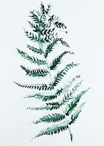 "Obraz na płótnie ""Fern leaf"""