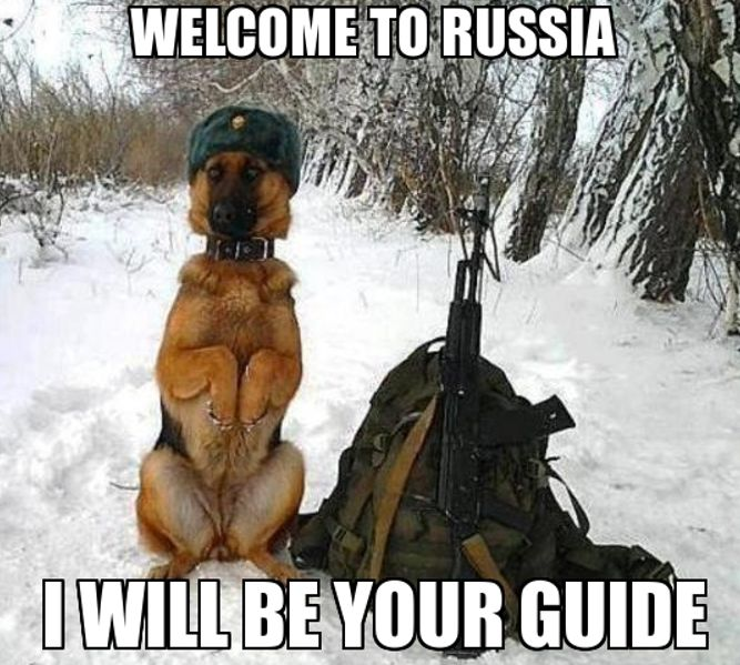 Don't look for these dog guides, most were poisoned last week. #sochi #putinsgames #winterolympics