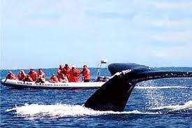 Whale Watching in Nova Scotia