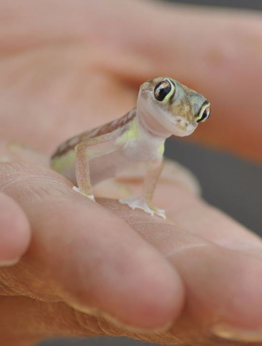 Small And Adorable