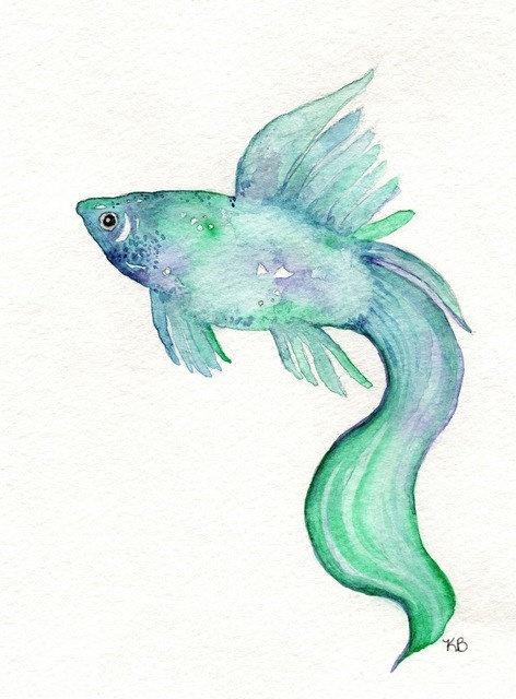 Beta Fish/Teal Blue Purple/ Watercolor Print by kellybermudez