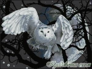 Хищные птицы - Птицы - Схемы в XSD - Кладовочка схем - вышивка крестиком