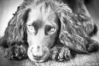 Stunning Sprocket in black and white