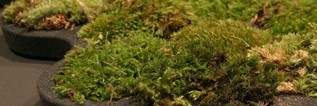 consoGlobe a trouvé le tapis de bain végétal en mousse véritable s'arrose à chaque fois que vous sortez de la douche, touche d'écologie pour salle-de-bain - Page 2