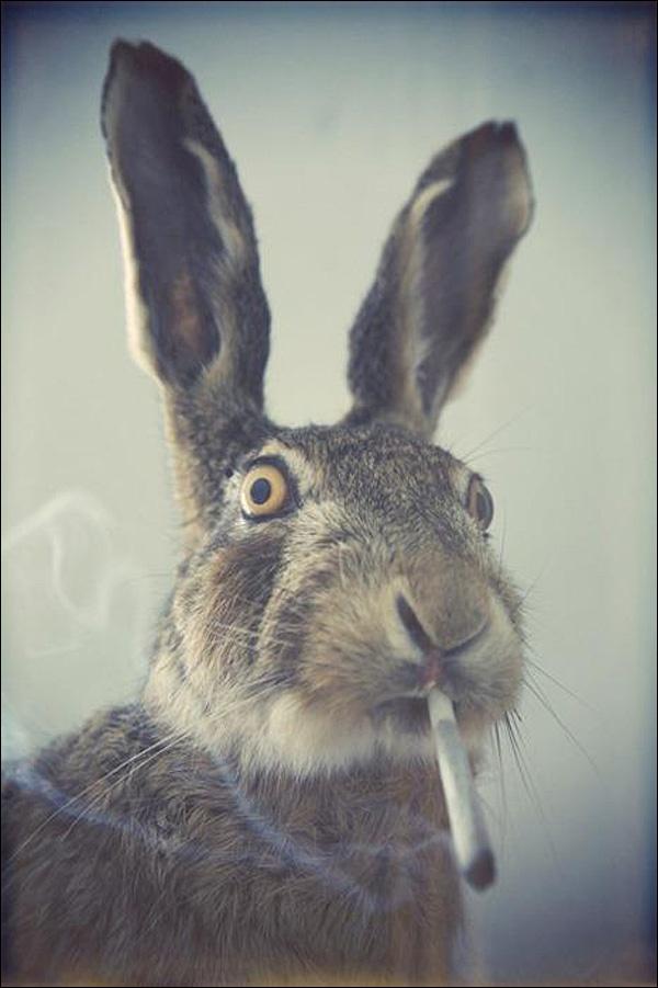 a high bunny