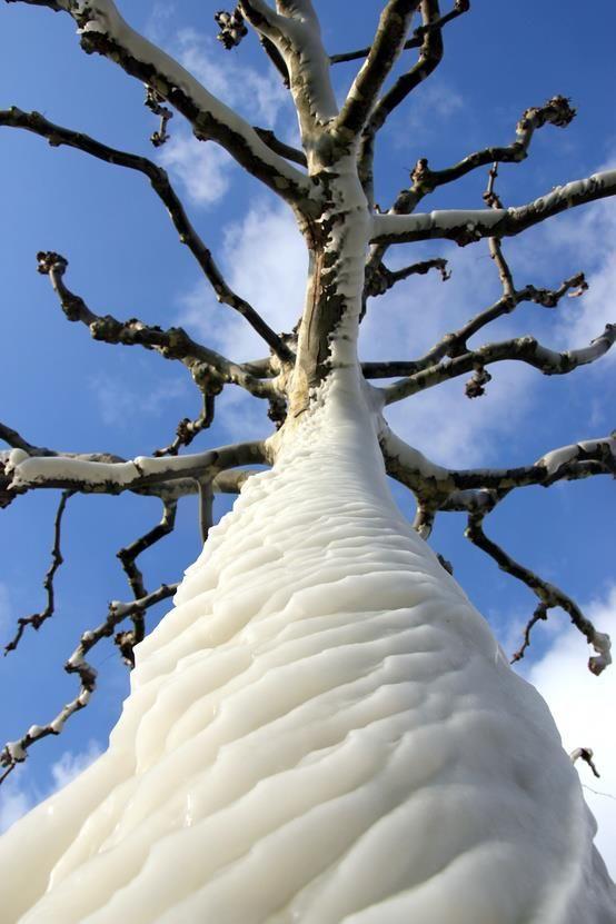 Tree Caught in Ice in Lac de Genève. Genève, Suisse
