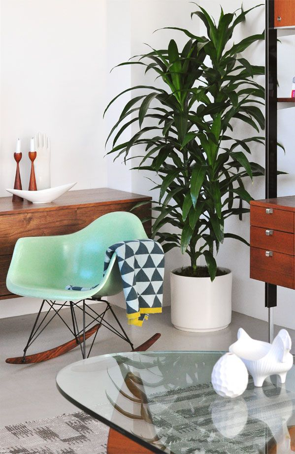 Mid-Century Modern interior with dracaena plant | Eames armchair with rocker base | Modern Findings (modernfindings.com)
