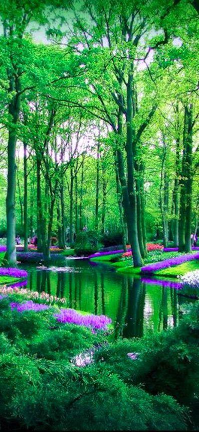 Keukenhof flower garden in Lisse, Netherlands