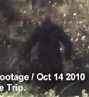 Bigfoot footage from Algonquin Park? by kimberley