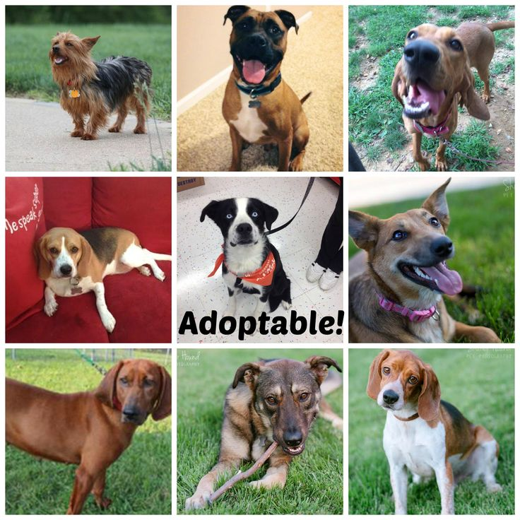 Our current adoptable dogs fpopets as of 8.25.14 Rowan
