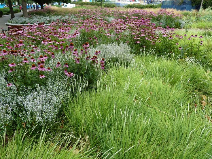 Piet oudolf potters field green pinterest for Gardening with grasses piet oudolf