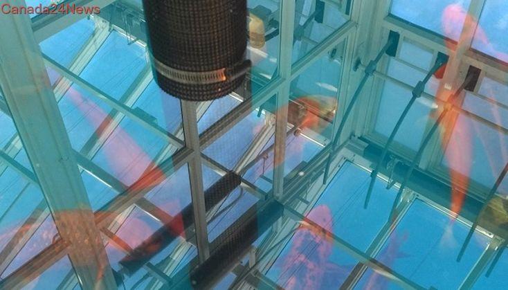 Cannabis company to use fish waste to grow marijuana in former pulp mill