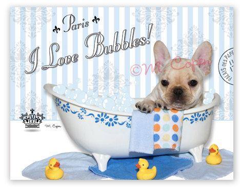 Jaime les bulles fauve bouledogue Français bain par MCopen sur Etsy