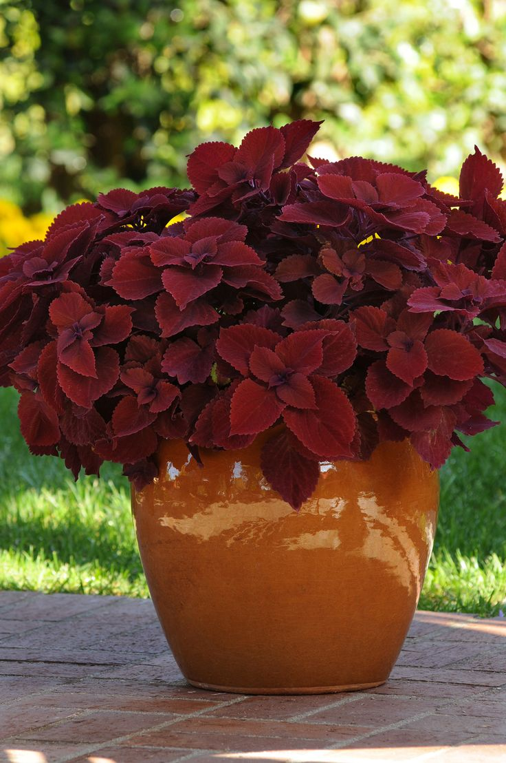 Garden Pots Best 618 Patio Pots And Containers Images On Pinterest Gardening