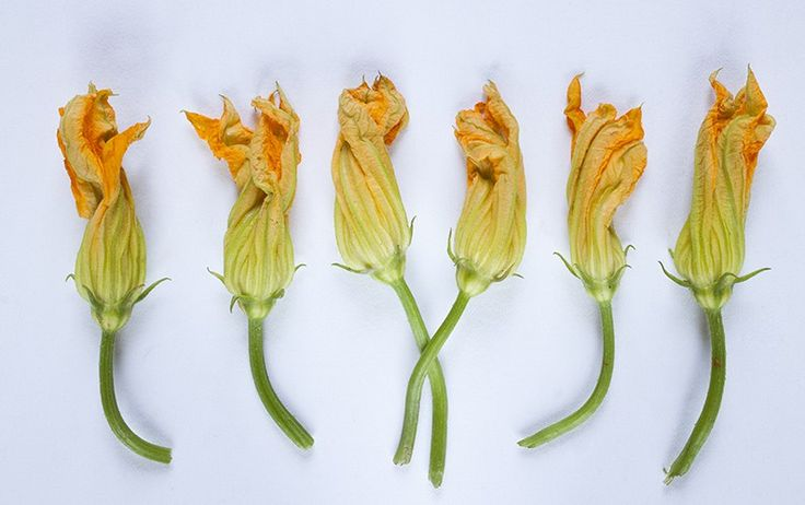 Baked Stuffed Squash Blossoms | The Table