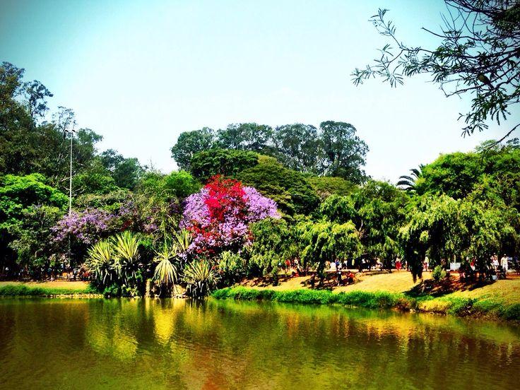 A San Paolo in Brasile esiste un parco chiamato Ibirapuera dove i sogni diventano realtà...