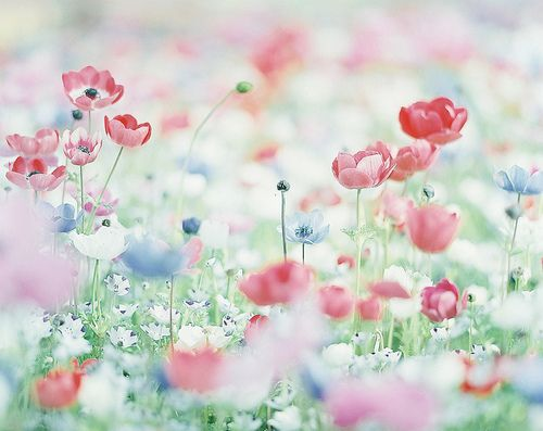 field of spring by sunao-films on Flickr.