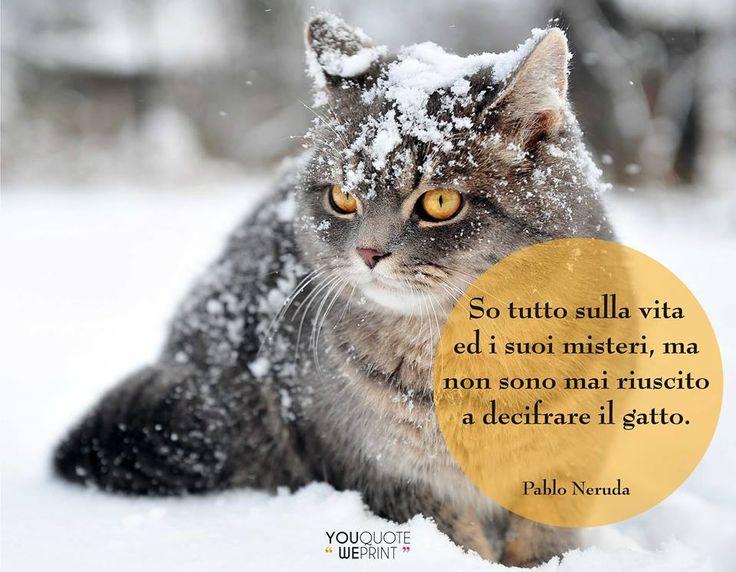 Il 17 febbraio si celebra la Festa nazionale del #gatto. Ecco la nostra raccolta di frasi sui gatti. So tutto sulla vita e i suoi #misteri ma sono mai riuscito a decifrare il gatto.
