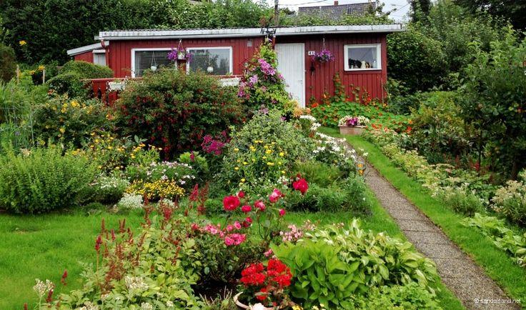 Hva er en kolonihage, hva er funksjonen og hvordan ser de ut? Her er en kort introduksjon til dette fenomenet. Fire videoer fra kolonihager i Stavanger er med i denne artikkelen.