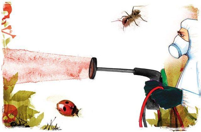 """Es gibt immer weniger Insekten. Ihre Zahl ist in den letzten Jahren stark zurückgegangen. Nicht in den letzten Jahrzehnten und Jahrhunderten, sondern in den letzten Jahren! """"Fachleute beziffern den…"""