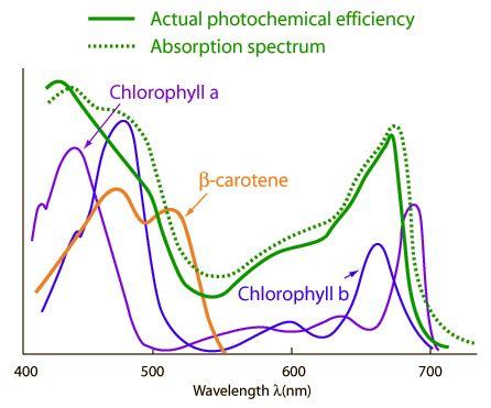 T5 light bulb spectrum chart