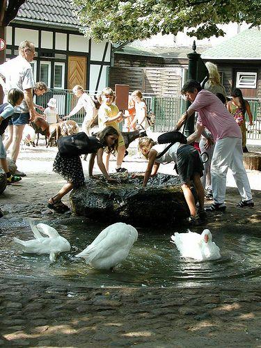 Amazing August Macke Zoologischer Garten I