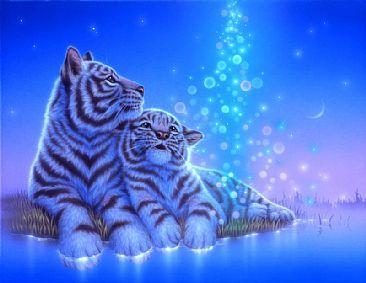 Light Rain-White tigerbyKentaroNishino