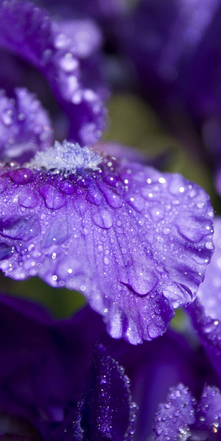 Petal Perfect Purple by ~JasunSweet on deviantART.