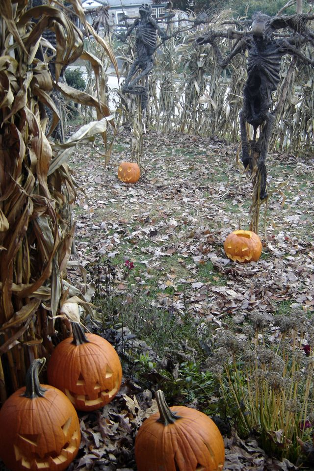autumn. pumpkin spice. halloween. warm colors. changing leaves. horror. costumes. chai. pumpkins....