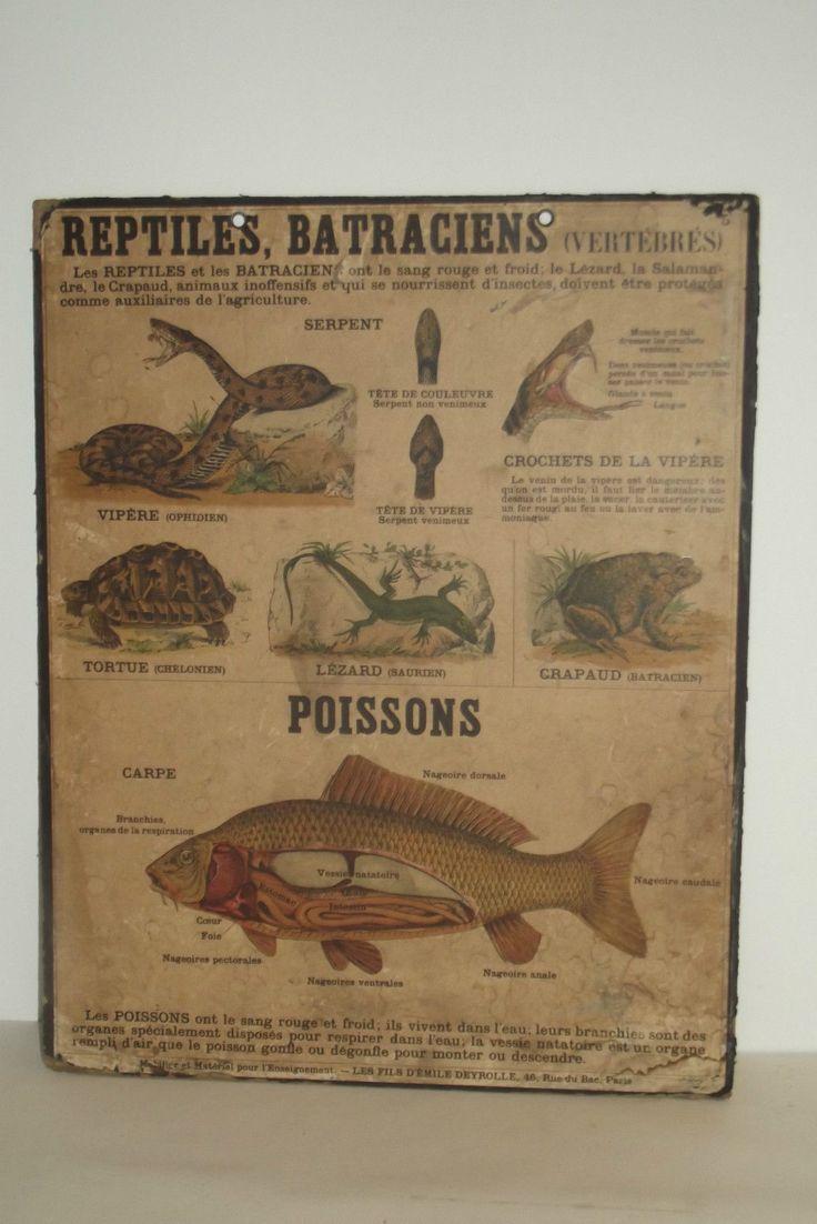 Deyrolle - Ancienne Planche Ecole N°5 Sciences Naturelles