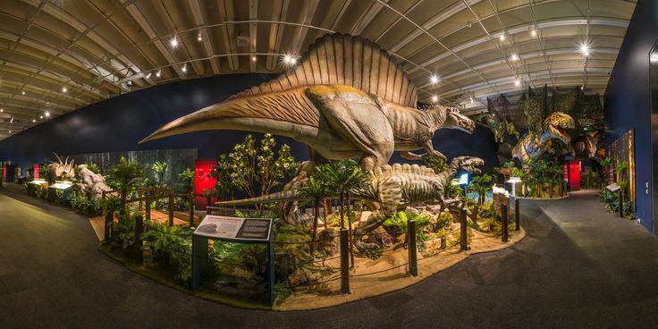 Sneak peek inside Dinosaur Discovery: Lost Creatures of the Cretaceous exhibition at Queensland Museum until 5 October 2015. Avoid the stampede and book tickets online www.qm.qld.gov.au/dinosaur